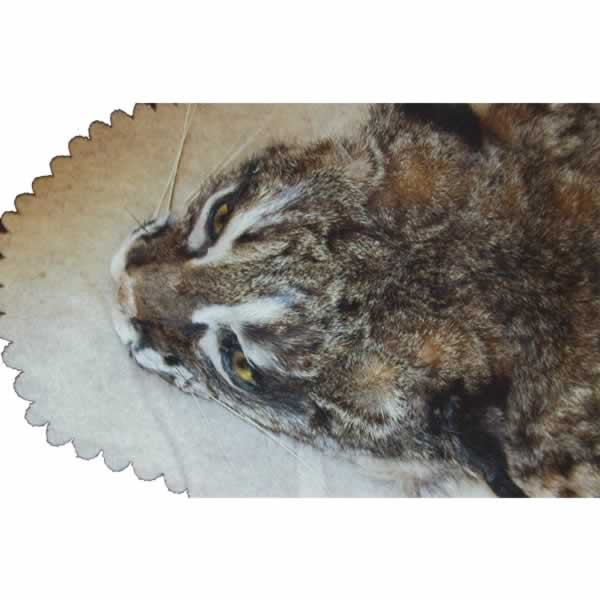 Chuck S Taxidermy Albany Or Photo Gallery Big Game
